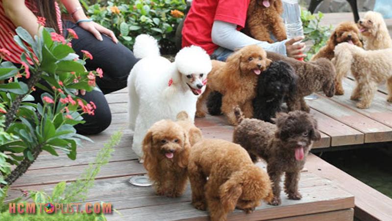 binbon-dog-shop-hcmtoplist