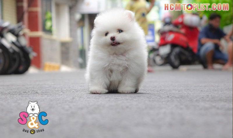 doi-net-ve-sc-dogshop-tphcm-hcmtoplist