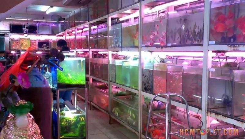 sai-gon-aquarium-pet-shop-hcmtoplist