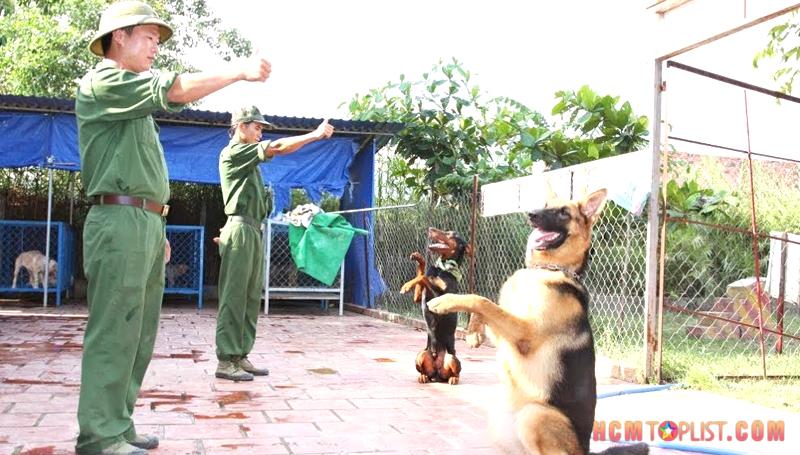 saigon-dog-hcmtoplist