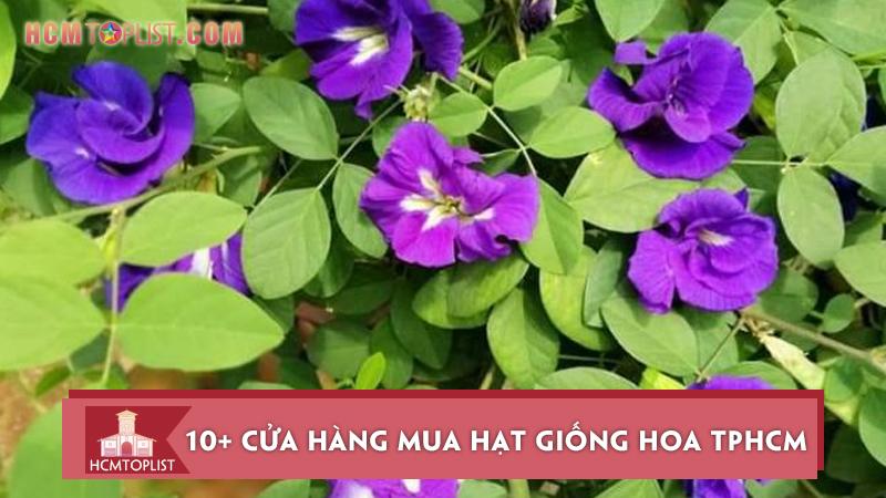 10-cua-hang-mua-hat-giong-hoa-tphcm-uy-tin-nhat